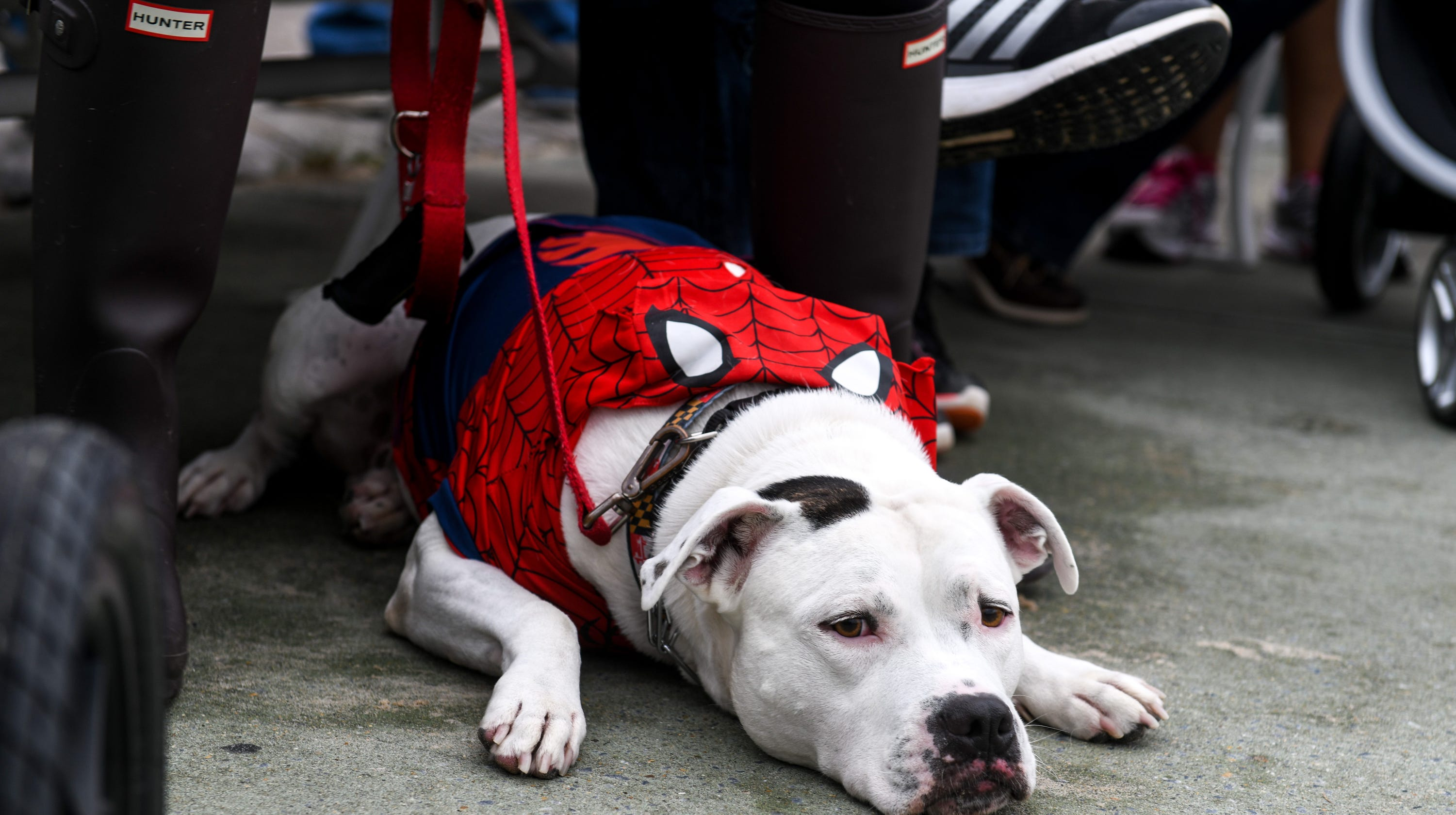 After outcry, proposed bill would allow pets at restaurant