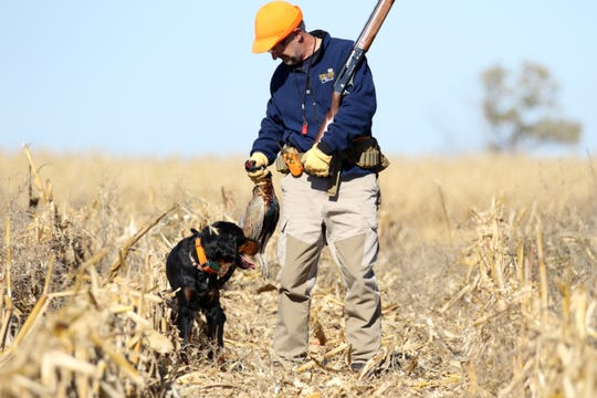 Gary Shawd of Sioux Falls gathers up his pheasant with dog Helga along side after walking a cornfield during last year's pheasant opener near Zell, S.D.