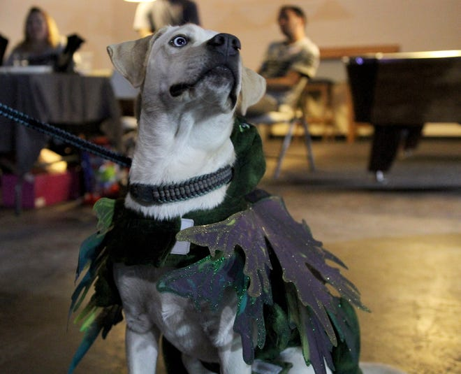 Dogs are dressed in their best costumes Saturday, Oct. 20, 2018, at The Ashby for Howloween.