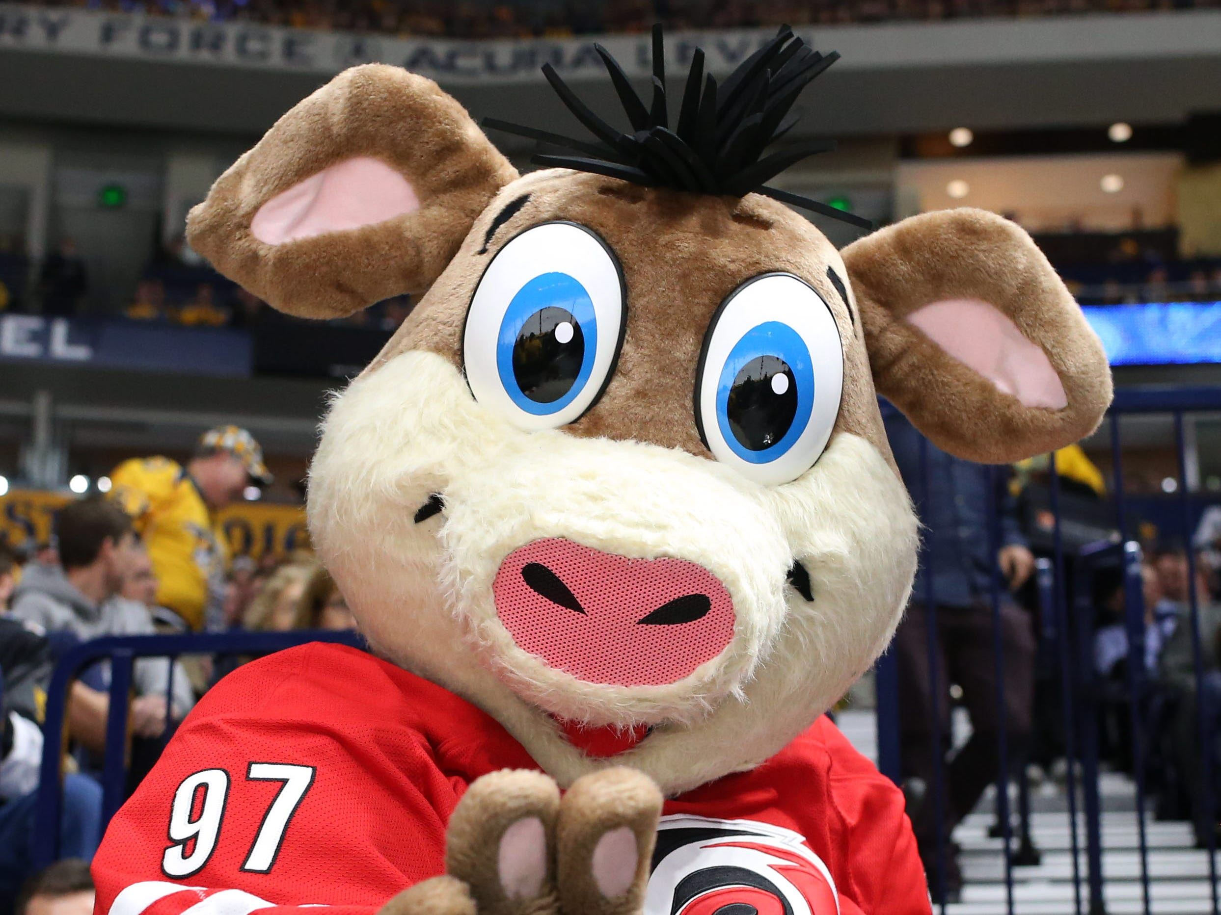 15. Stormy, Carolina Hurricanes.