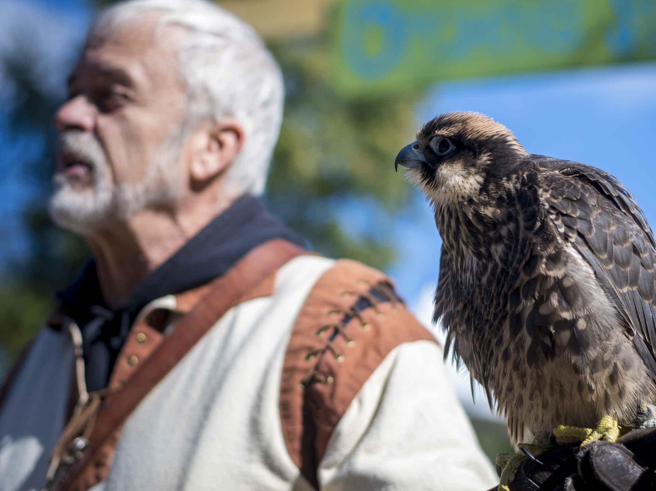 Gary Denzler holds a Lanner falcon during Romance Weekend at the Ohio Renaissance Festival Sunday, October 21, 2018 in Waynesville, Ohio.
