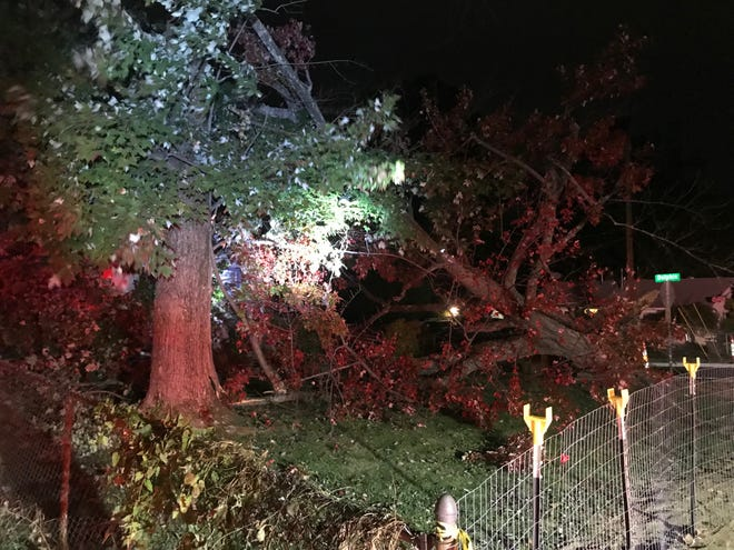 Trees and wires were blown down by gusty winds Oct. 20 at Pippin Road and Dolphin Drive in Colerain Township.