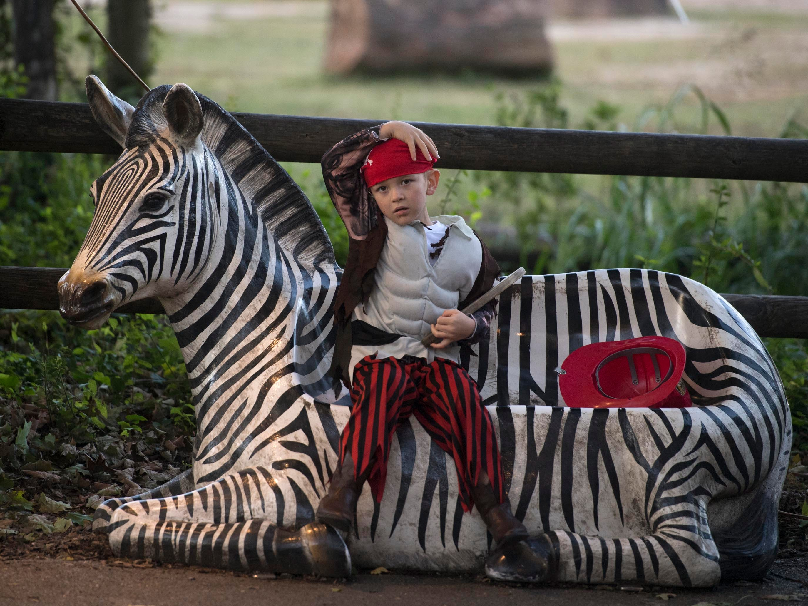 A young pirate rests on a zebra bench during Zoo Knoxville's Boo! at the Zoo on Saturday, October 20, 2018.