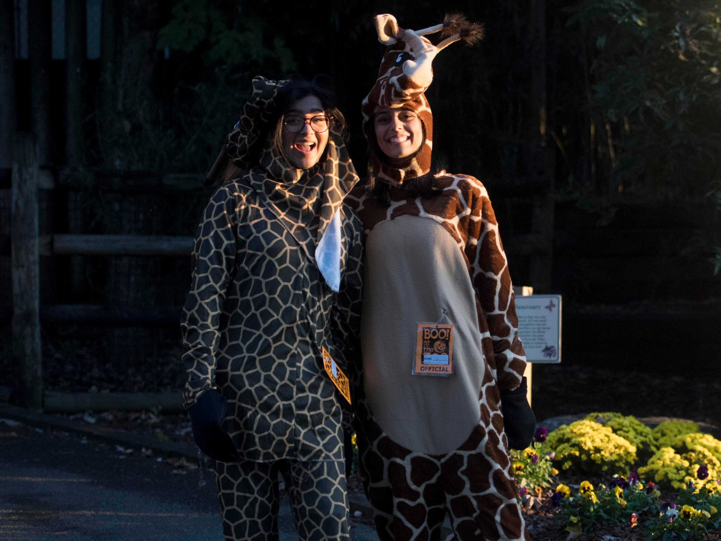 Giraffe costumed volunteers at Zoo Knoxville's Boo! at the Zoo on Saturday, October 20, 2018.