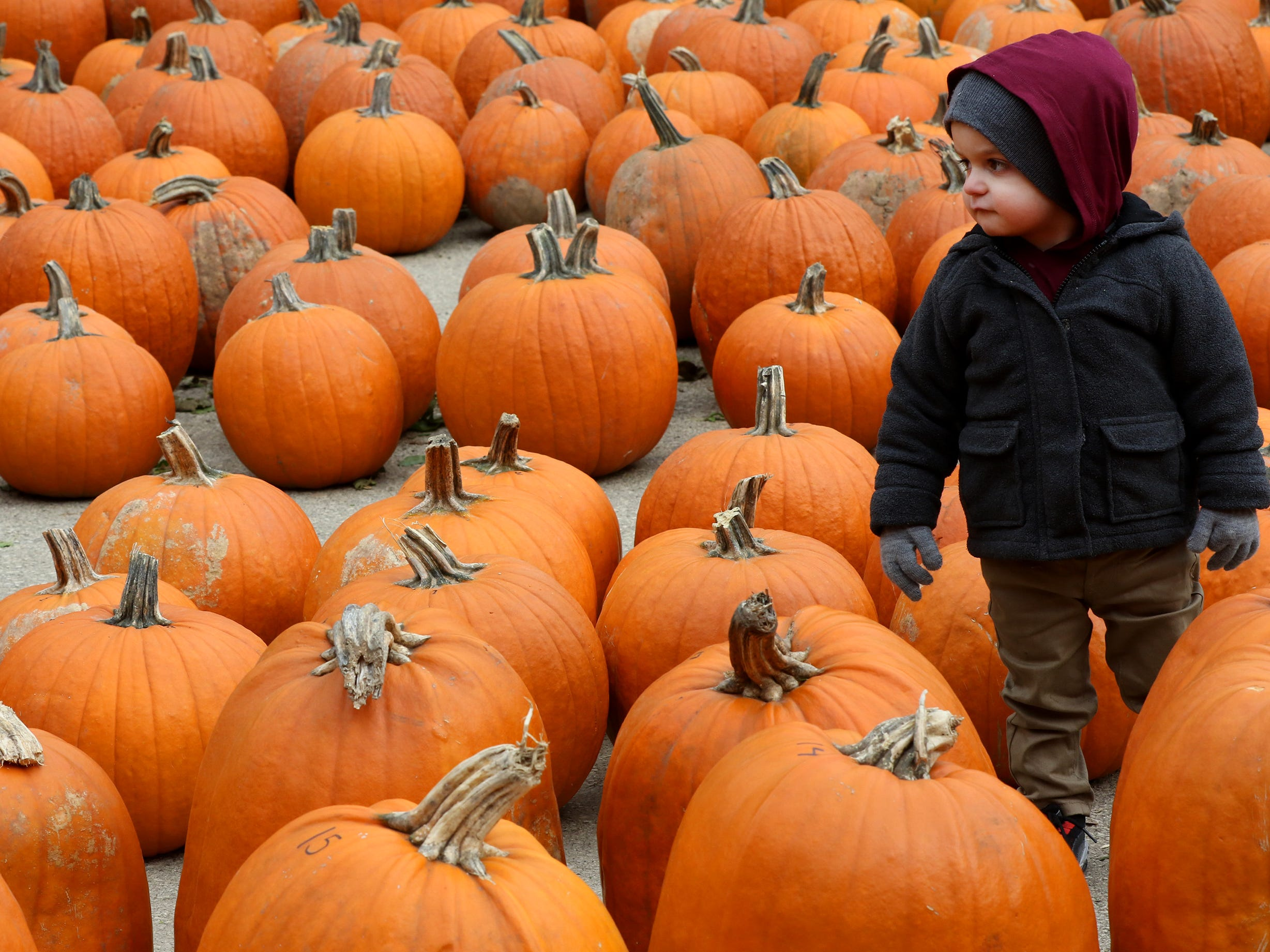 Orion Berg of Milwaukee checks out his choices at the Lindner Pumpkin Farm in New Berlin on Oct. 20.