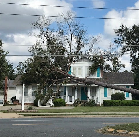 Hurricane Michael wake-up call: Time to take down problem pines, other trees | Opinion