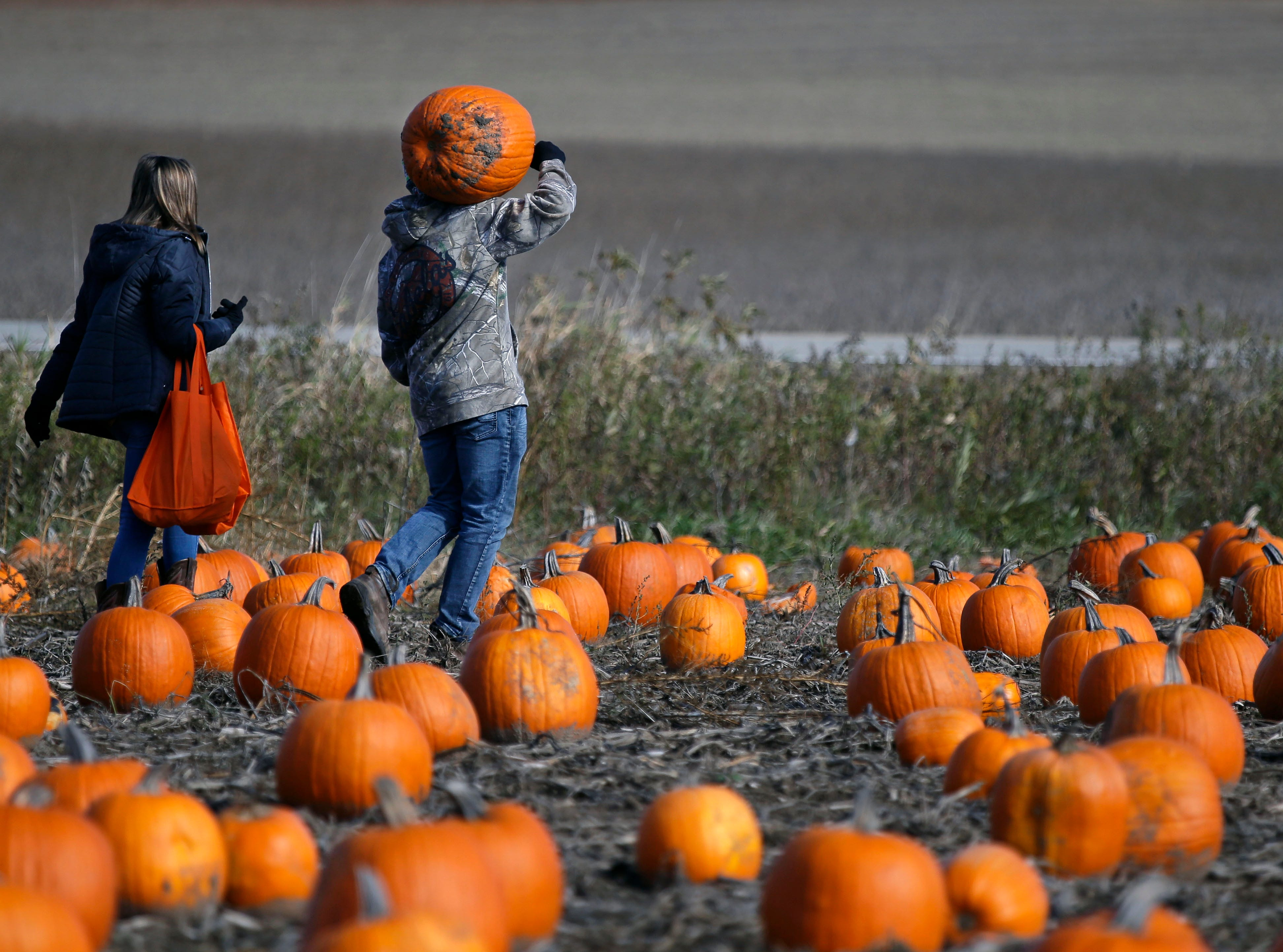 Paige Gregor and Ben Corsi of De Pere make their way through a pumpkin patch Sunday, October 21, 2018, at Cuff Farms in Hortonville, Wis.