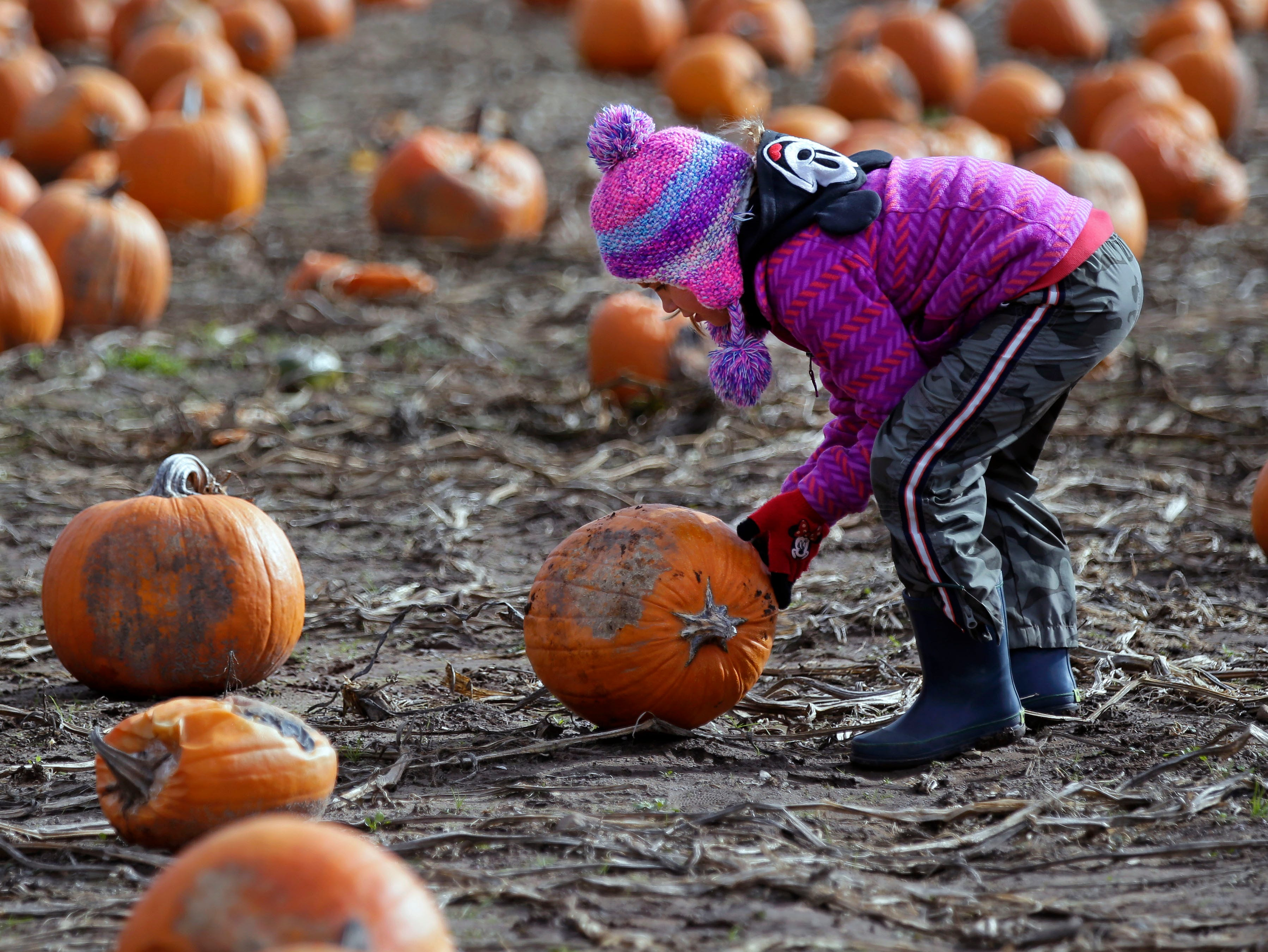 Mackenzie Kroncke of Neenah rolls her pumpkin through the patch Sunday, October 21, 2018, at Cuff Farms in Hortonville, Wis.