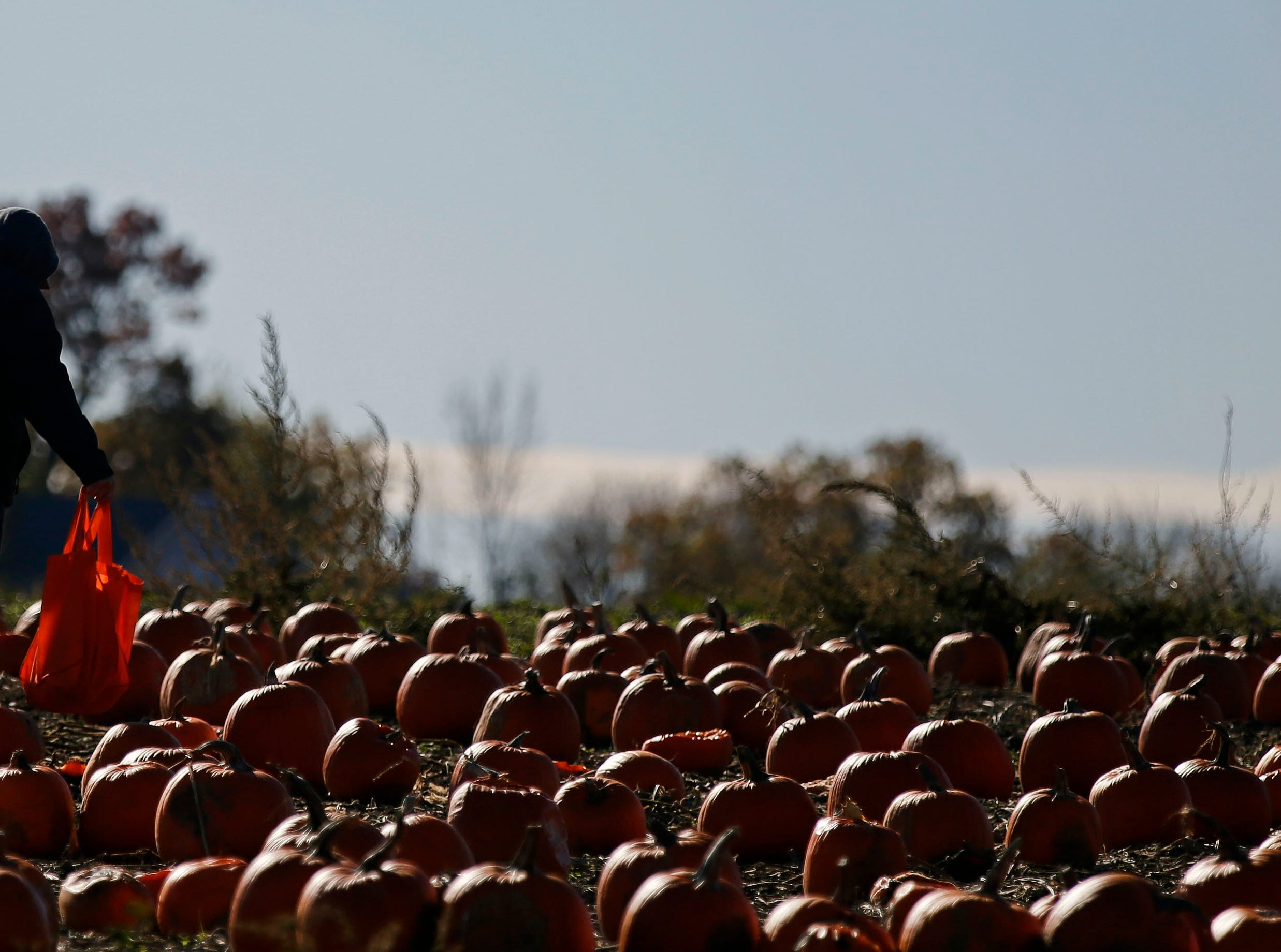 Picking a pumpkin was on the agenda for many families Sunday, October 21, 2018, at Cuff Farms in Hortonville, Wis.
