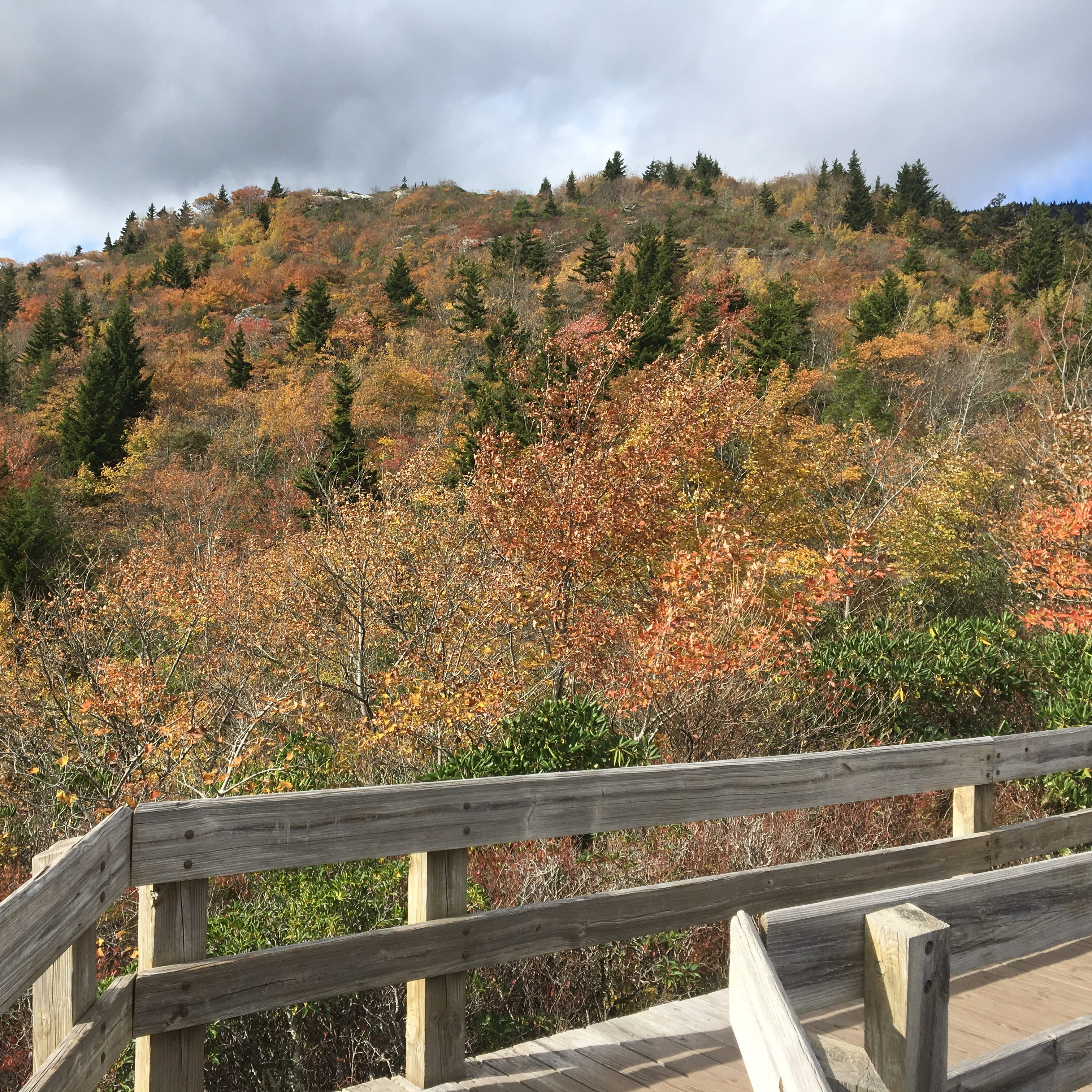 How is fall color looking at Grandfather Mountain area of Blue Ridge Parkway?
