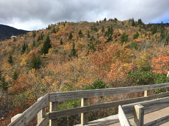 Fall color is muted but still lovely Oct. 20, 2018 at Rough Ridge on the Blue Ridge Parkway.