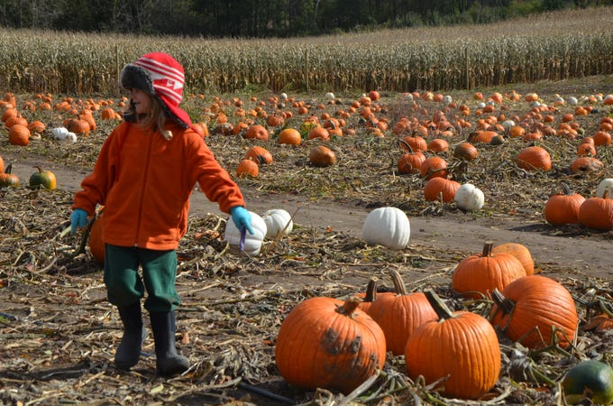 Max Tuttle, 6, of Battle Creek points to a pumpkin he likes at Gull Meadow Farms in Richland on Sunday, October 21, 2018.
