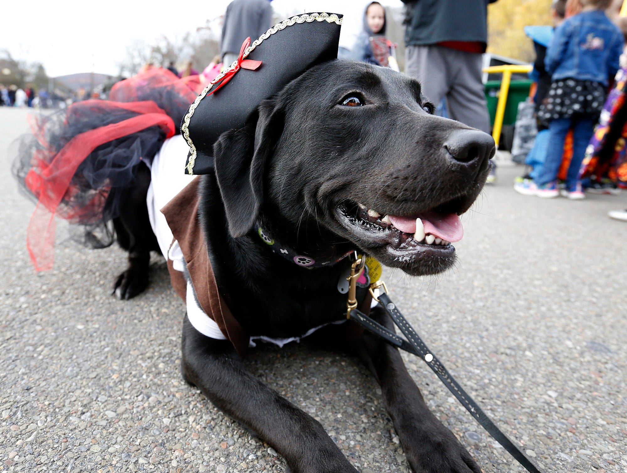 2015: Abby sported her pirate attire Saturday at Southport's Halloween Festival Saturday while working with the YWCA's Reading PAWTners Program.