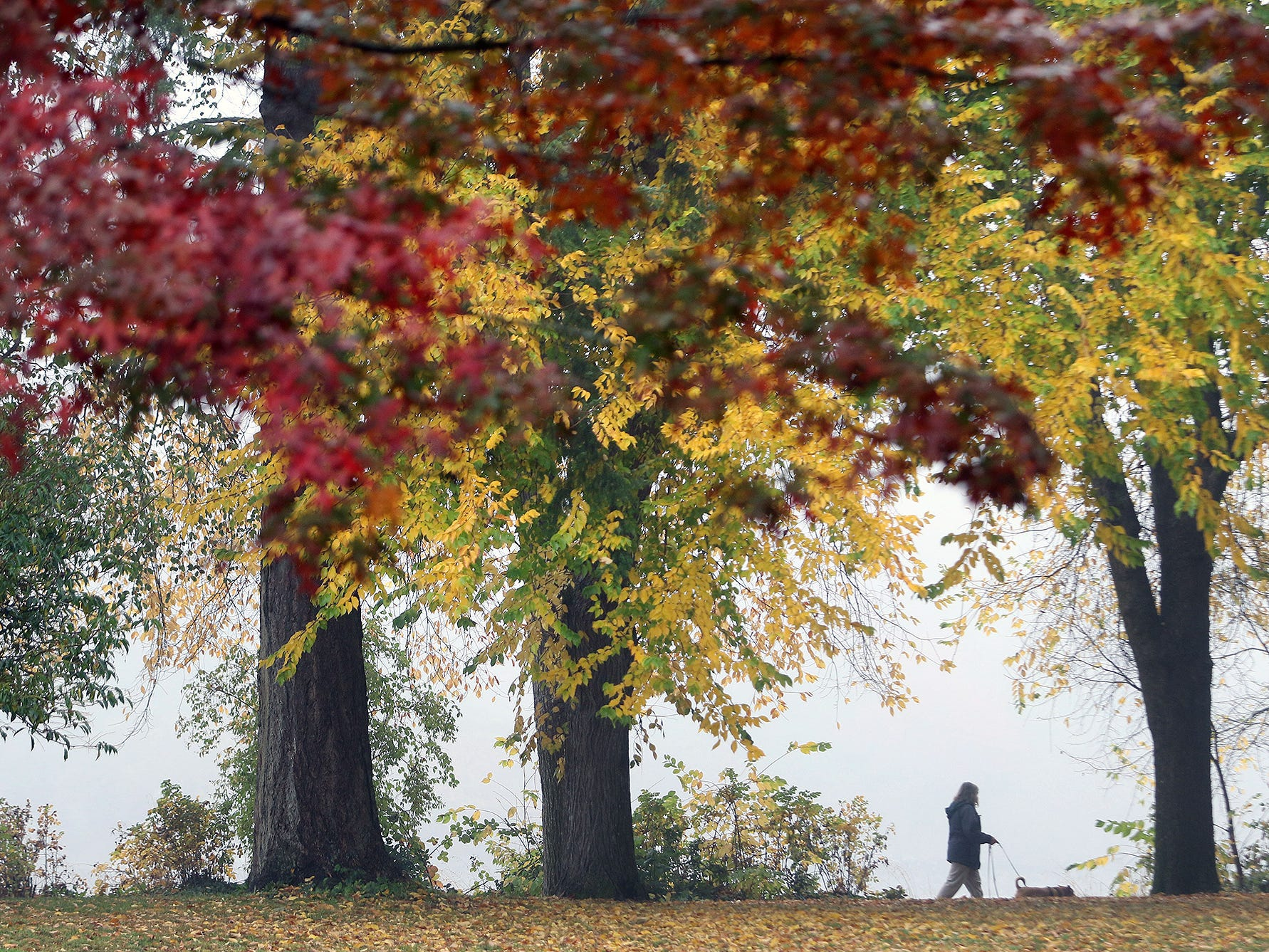 Vaughne Sprowls walks her dog Marty in on a foggy morning at Evergreen-Rotary Park in Bremerton on Monday, October 22, 2018.