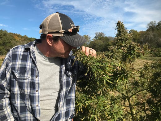 Tracy Lehman shows off a hemp plant, which may look like marijuana but does not contain the high-inducing THC.