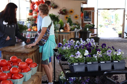 A woman checks out with a cart of purple and white pansies at The Junction Plants and Produce on Monday, one of the first cold days of fall, with temperatures falling as low as 33 degrees Fahrenheit overnight.