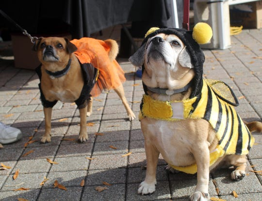 Pumpkinfest will feature a costume contests for kids, pets and adults.