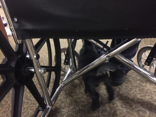 Riva explores under a resident's wheelchair.