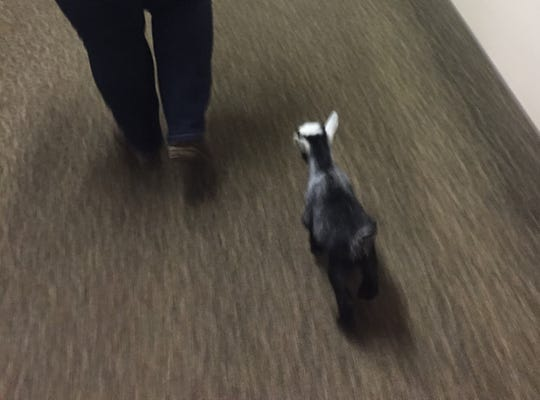 Riva hops down the hallways of Pataskala Oaks on her way to visit more residents.