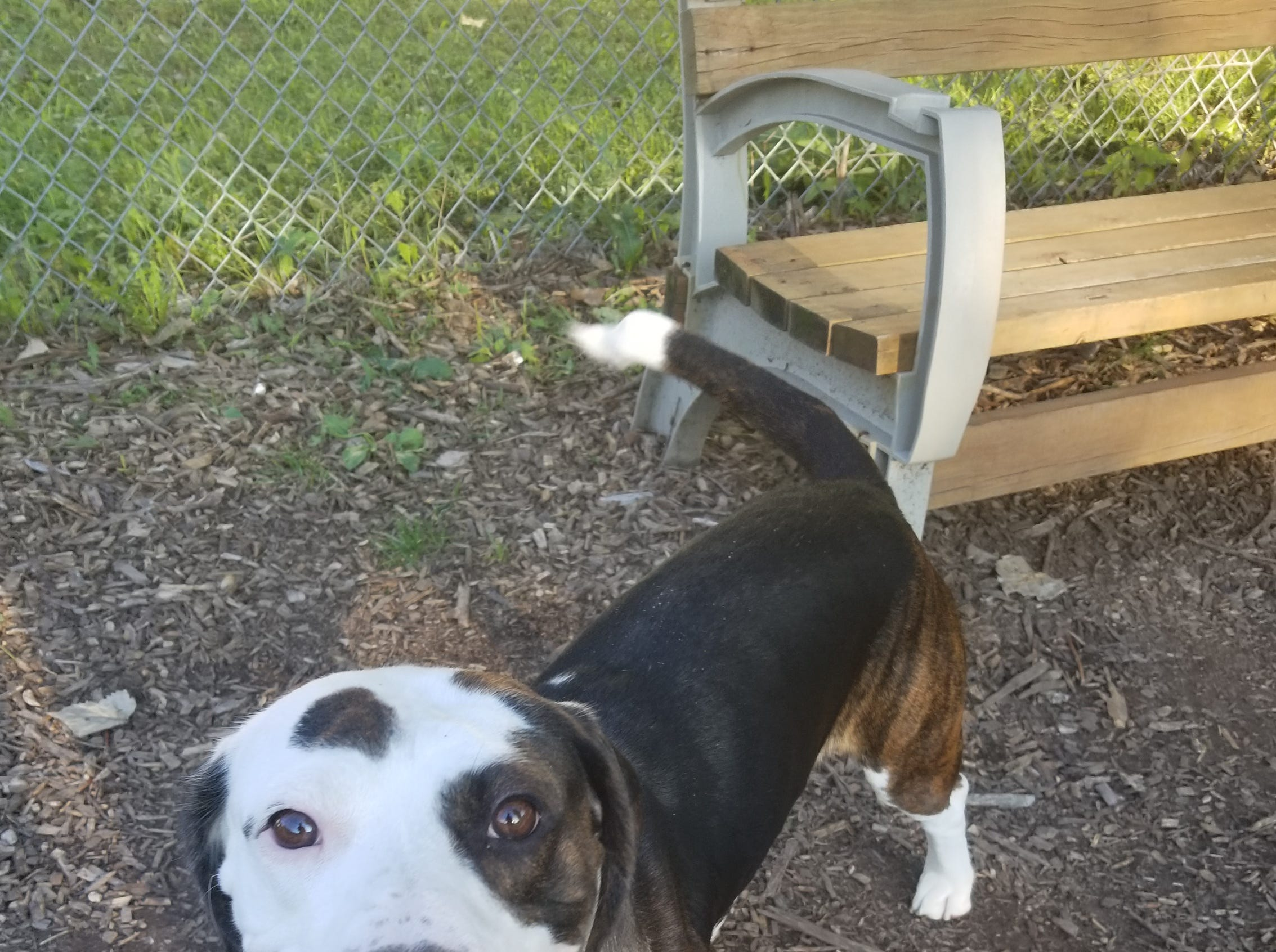 A 2-year-old mixed breed, Sparky loves people. She is spayed.
