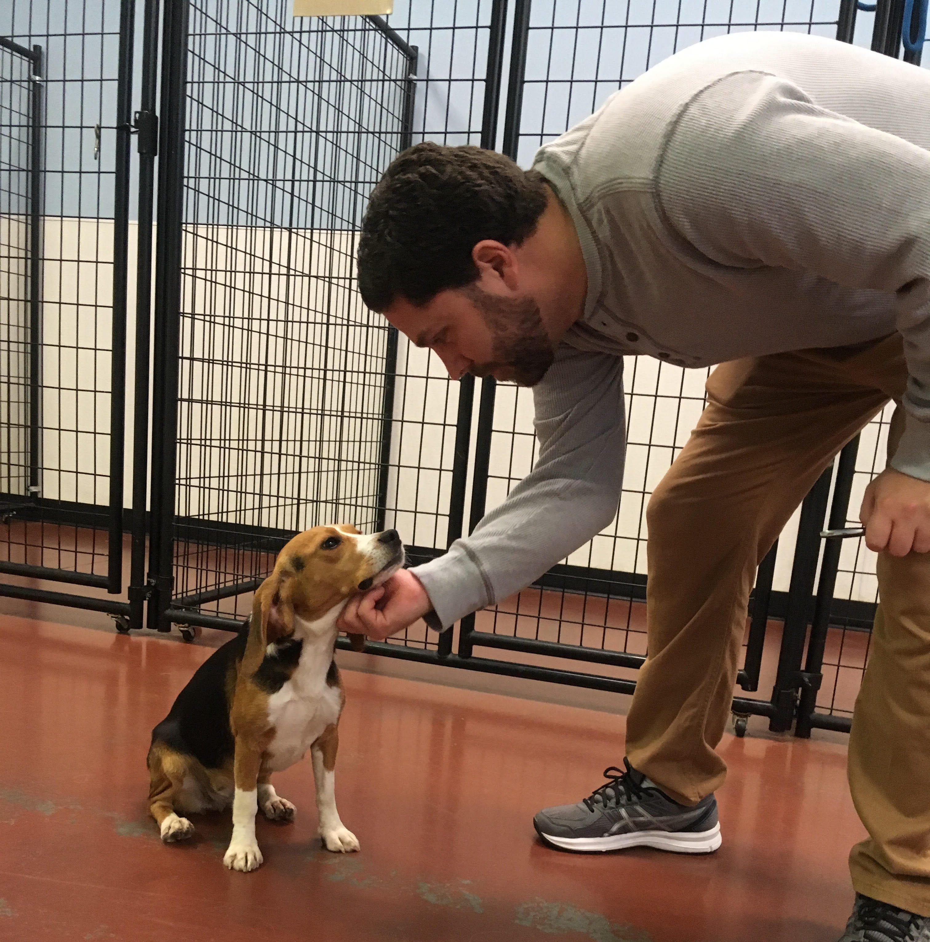 Lost beagle chooses her rescuer
