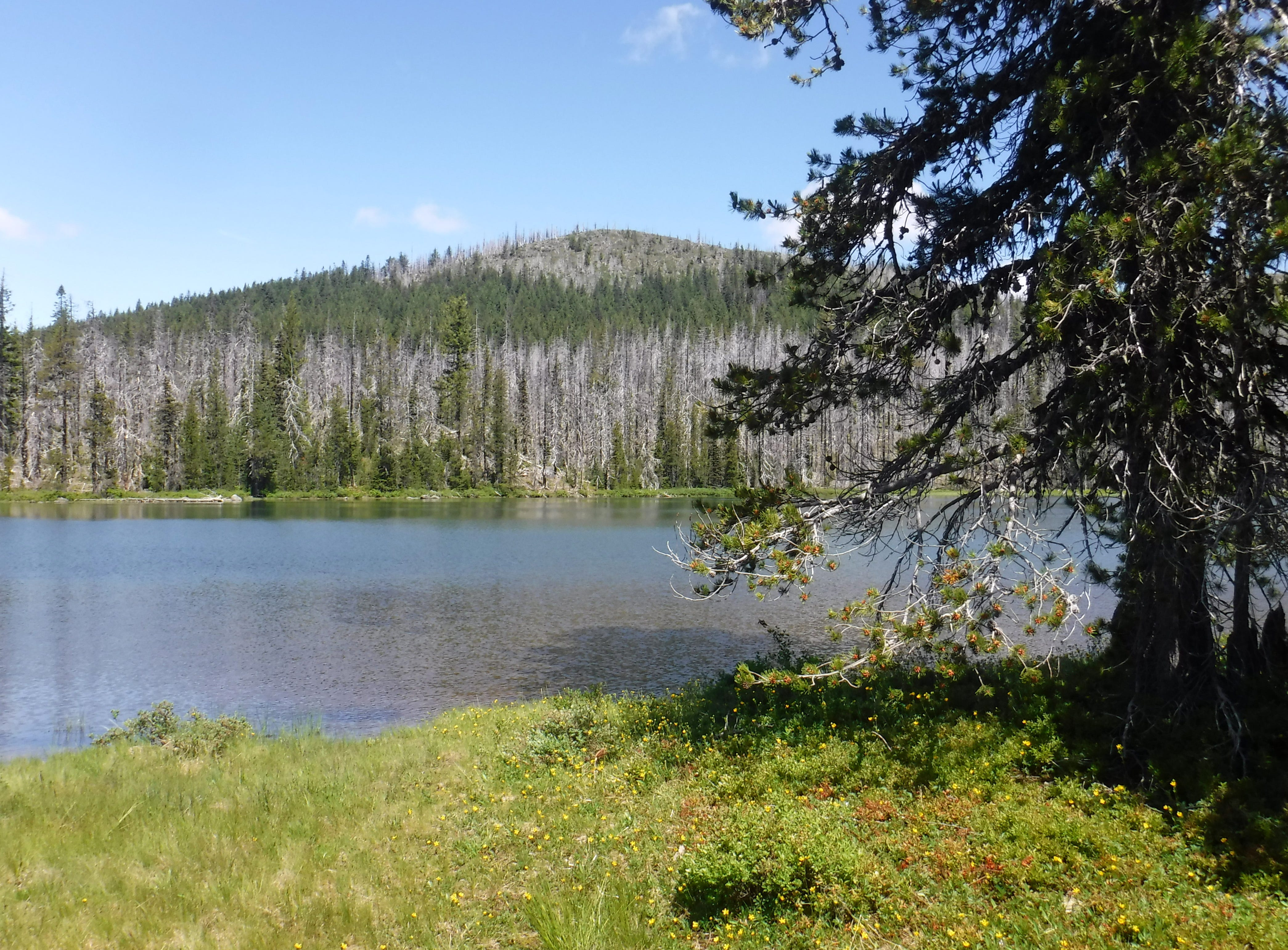 Charred trees are seen in the view north with from the third Patjens Lake.