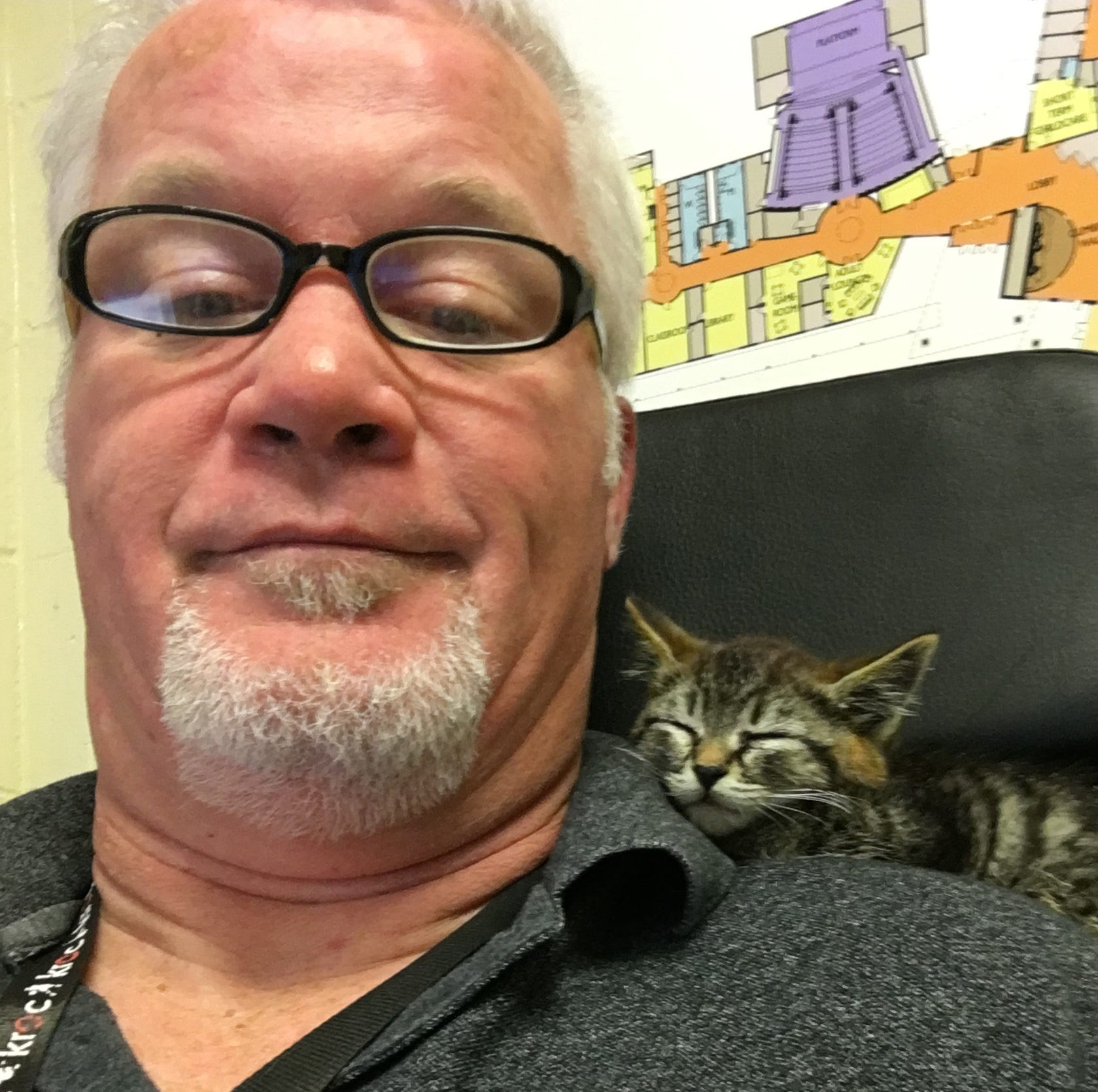 Sticky the kitty: Kitten glued to road rescued by driver on his way to work in Salem