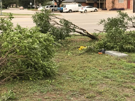 A car drove through seven small trees at Belvedere Cemetery on Monday, Oct. 22. The car left part of its light.