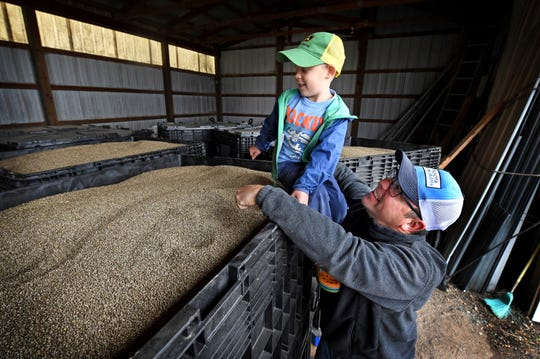 In this Oct. 5, 2018 photo, John Strohfus and his son, Martin, 5, look over 2,000-pound containers of Katani hemp seed in a storage building on their farm in Afton, Minn. Strohfus, the president of Minnesota Hemp Farms and one of the state's leading advocates promoting hemp farming, has harvested his hemp crop for the year.