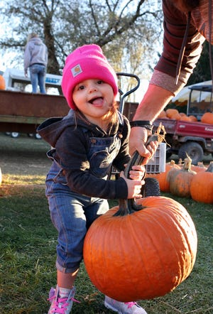 Ellie Bauer, 3, of Mukwonago, gets help lifing a pumpkin from dad, Greg, at Schuett Farms in Mukwonago on Oct. 22. The Resilient Farms Conference is an opportunity to hear from farmers from around the state who have learned how to navigate the times, and success including pumpkin patches, agri-tourism ventures and more.