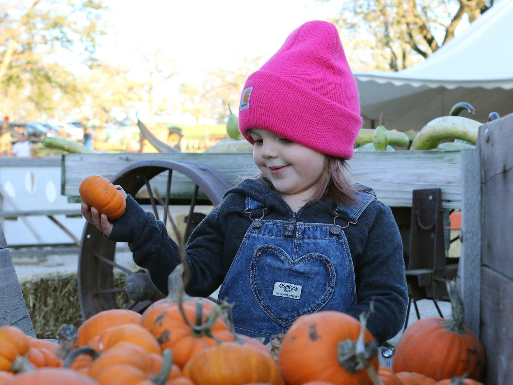 Ellie Bauer, 3, of Mukwonago, picks out her favorite mini pumpkins at Schuett Farms in Mukwonago on Oct. 22.