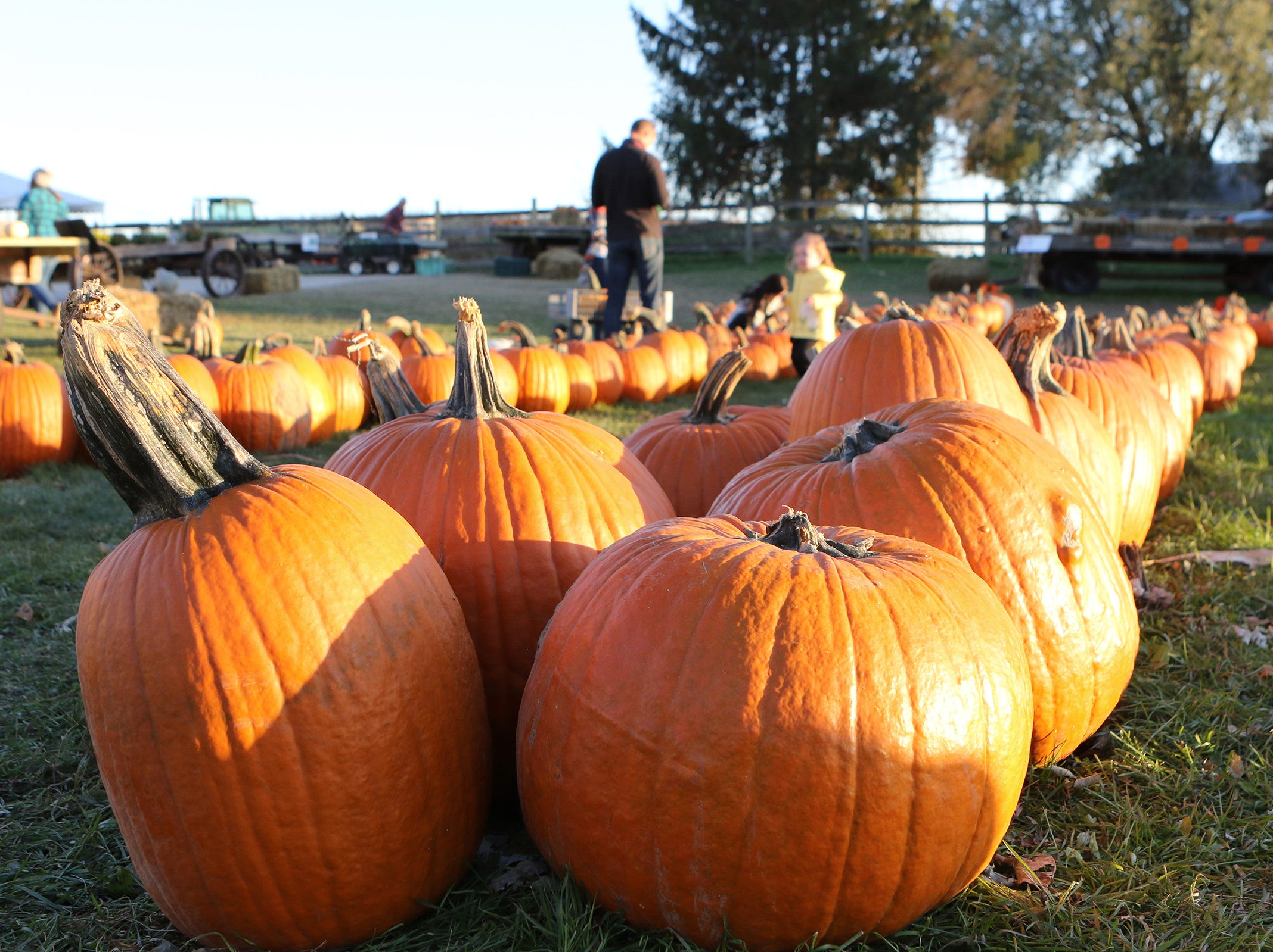 A spell of dry weather brought customers to Schuett Farms in Mukwonago on Oct. 22.