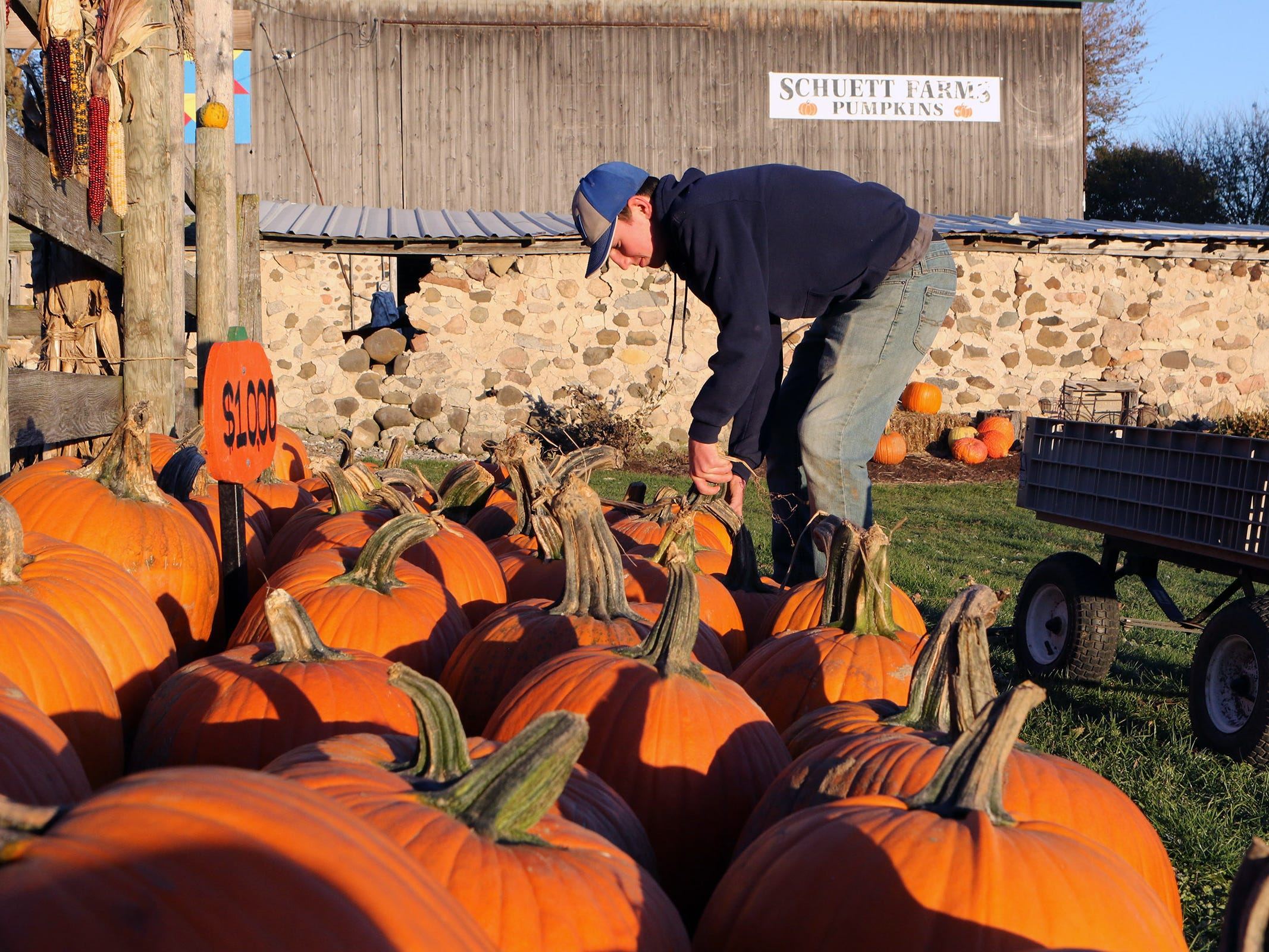 Matthew Deering, Mukwonago, sets out pumpkins for sale at Schuett Farms in Mukwonago on Oct. 22.