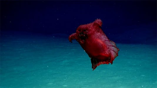 Headless Chicken Monster