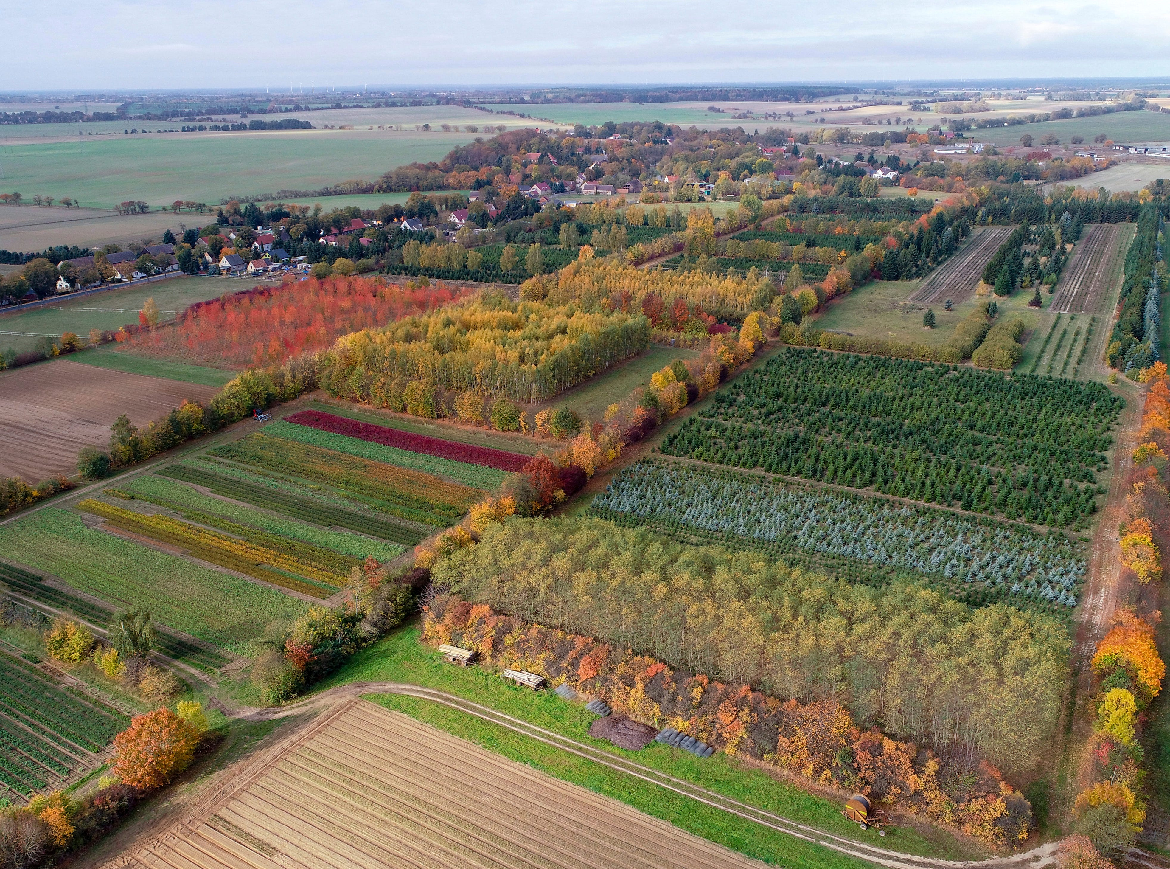 Various colorful trees of a tree nursery are seen in Tempelberg, Germany on Friday, Oct.19, 2018.