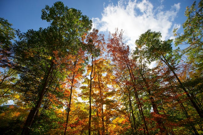 Leaves of various colors on the trees in Harts Location, New Hampshire on Oct. 10, 2018.