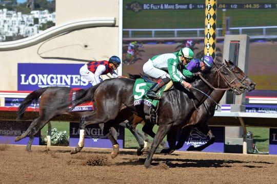 Bar Of Gold (5) win the Filly & Mare Sprint during the 34th Breeders' Cup world championships at Del Mar Thoroughbred Club in 2017.