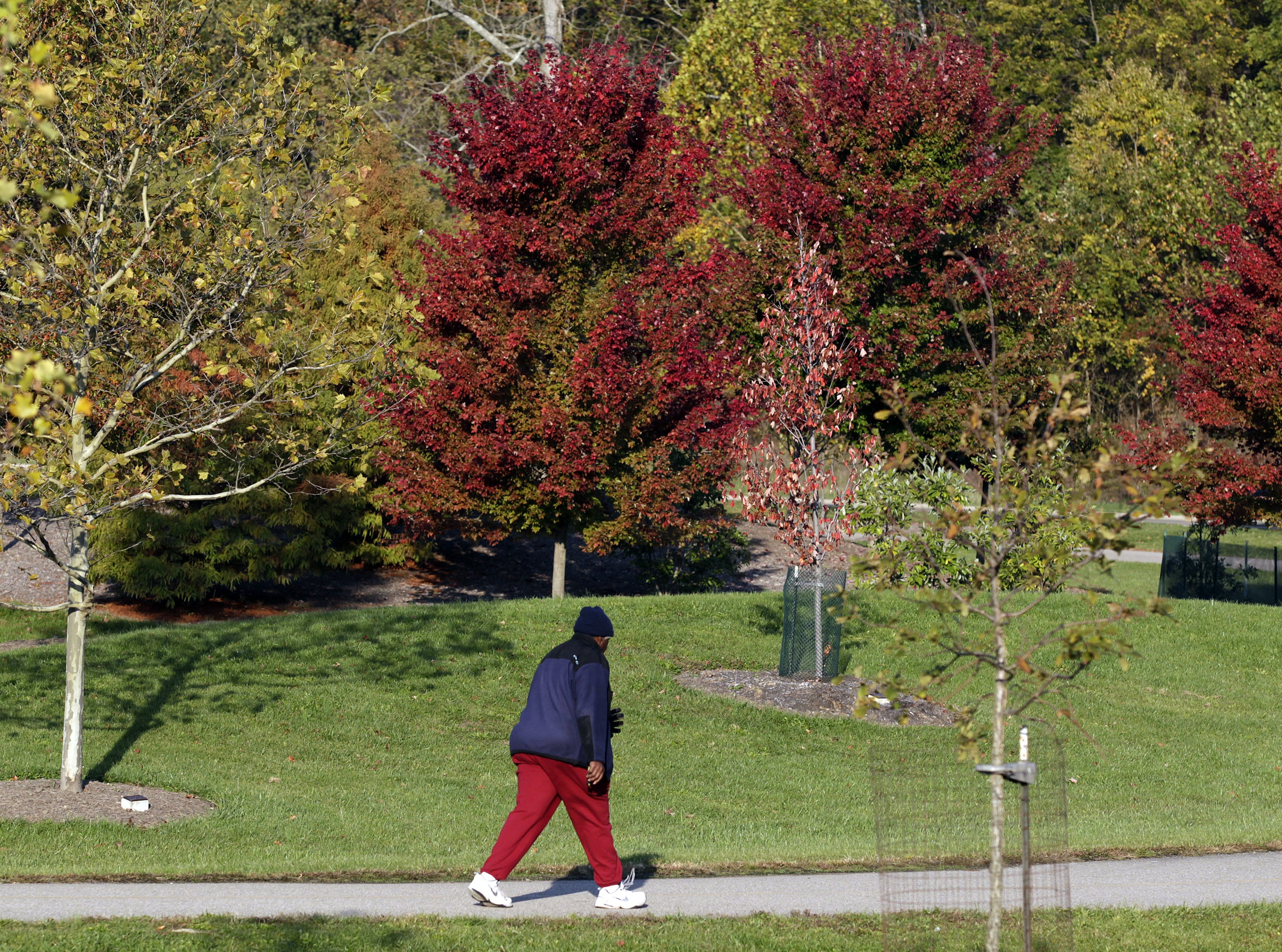 Trees at Winton Woods Park in Springfield Township when colors have changed, Oct. 12, 2012.
