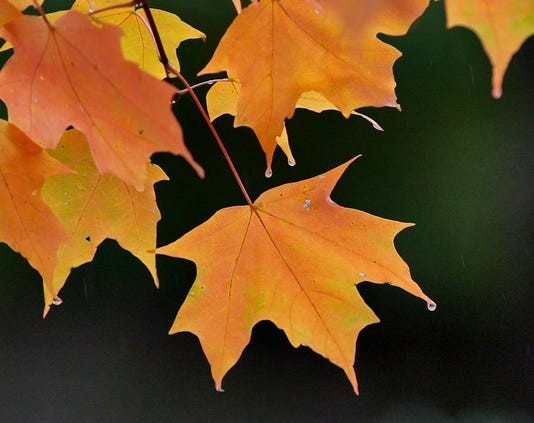 hamco parks autumn 1