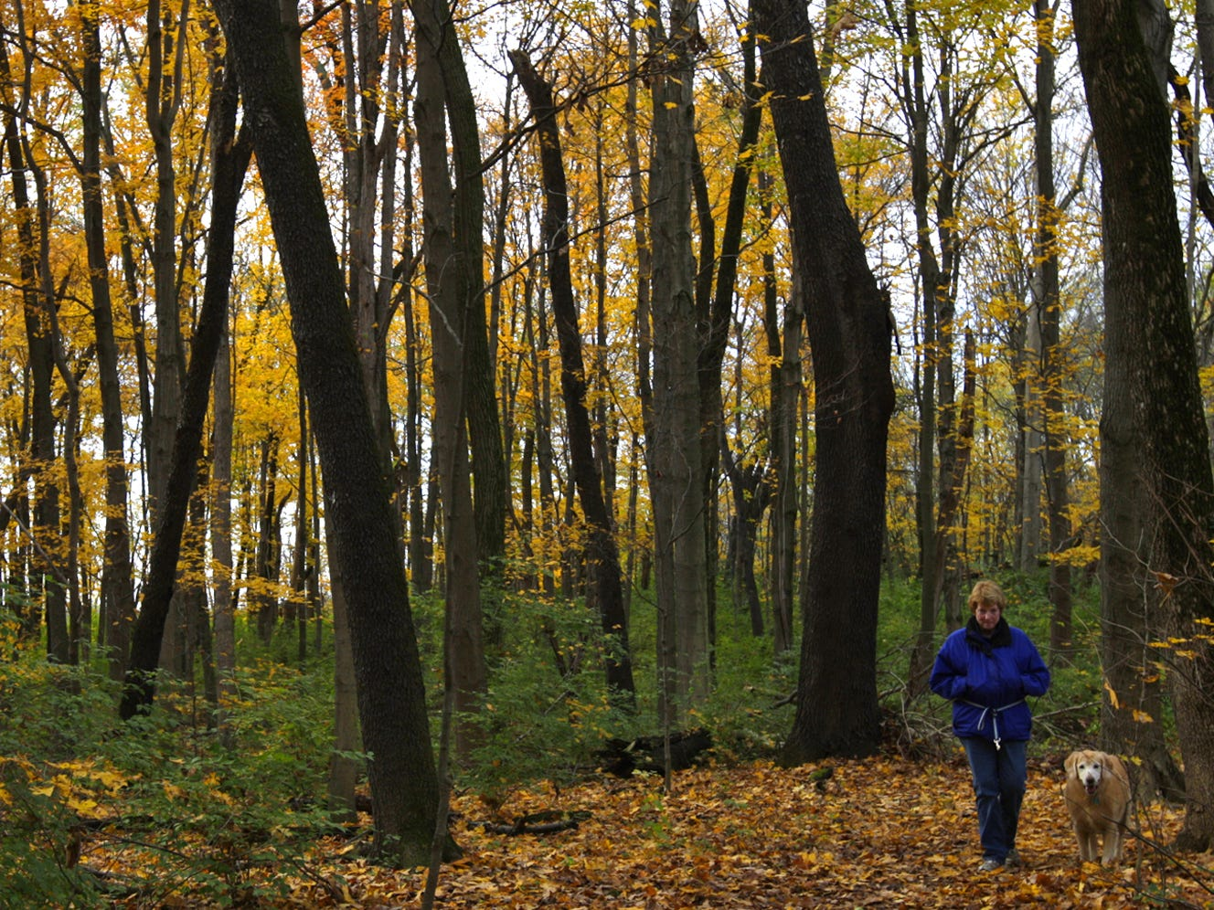 Enjoying the brilliant fall colors, Judi Huff of Greenhills and her 10-year-old dog Bailey walk in Winton Woods near the Great Oaks trail in October 2011.
