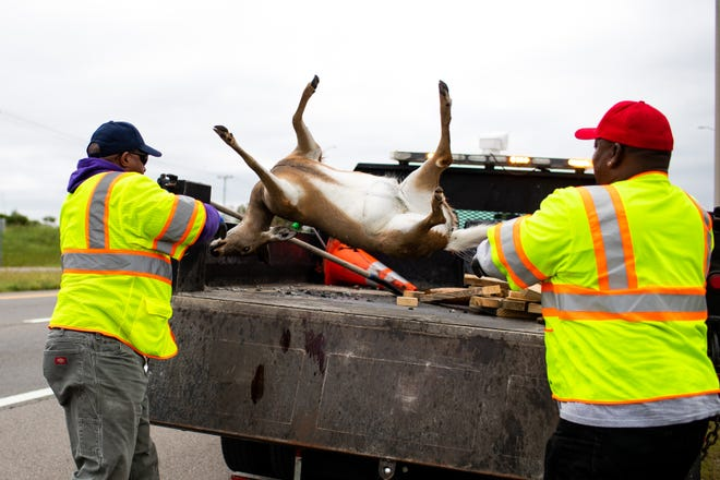 TDOT workers Frederick Lisenbee, left, and Robert Gardner throw a dead deer in the back of their truck along Highway 374 on Oct. 11 in Clarksville.