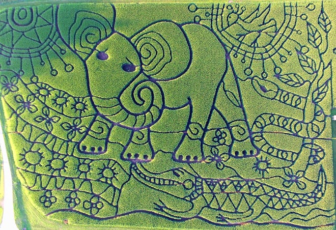 """In 2018 the Treinen Farm corn maze in Lodi features a design based on """"The Elephant's Child."""""""