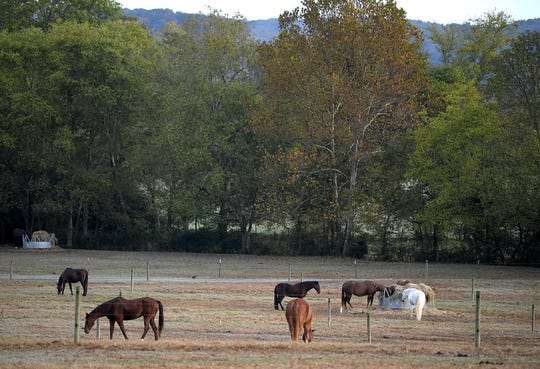 Horses gaze on a farm in Fernvale, Tennessee, on Oct. 23.