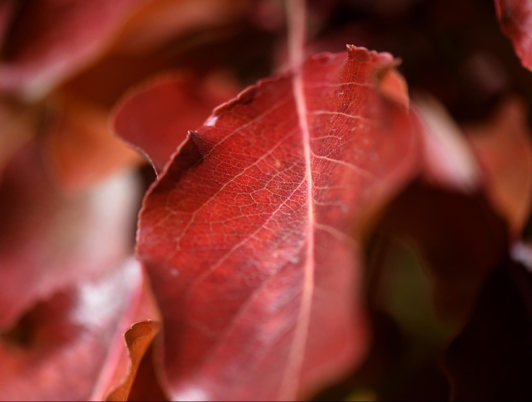 Images of Fall at the Wilbur D. May Arboretum