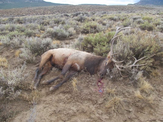 Illegally killed elk
