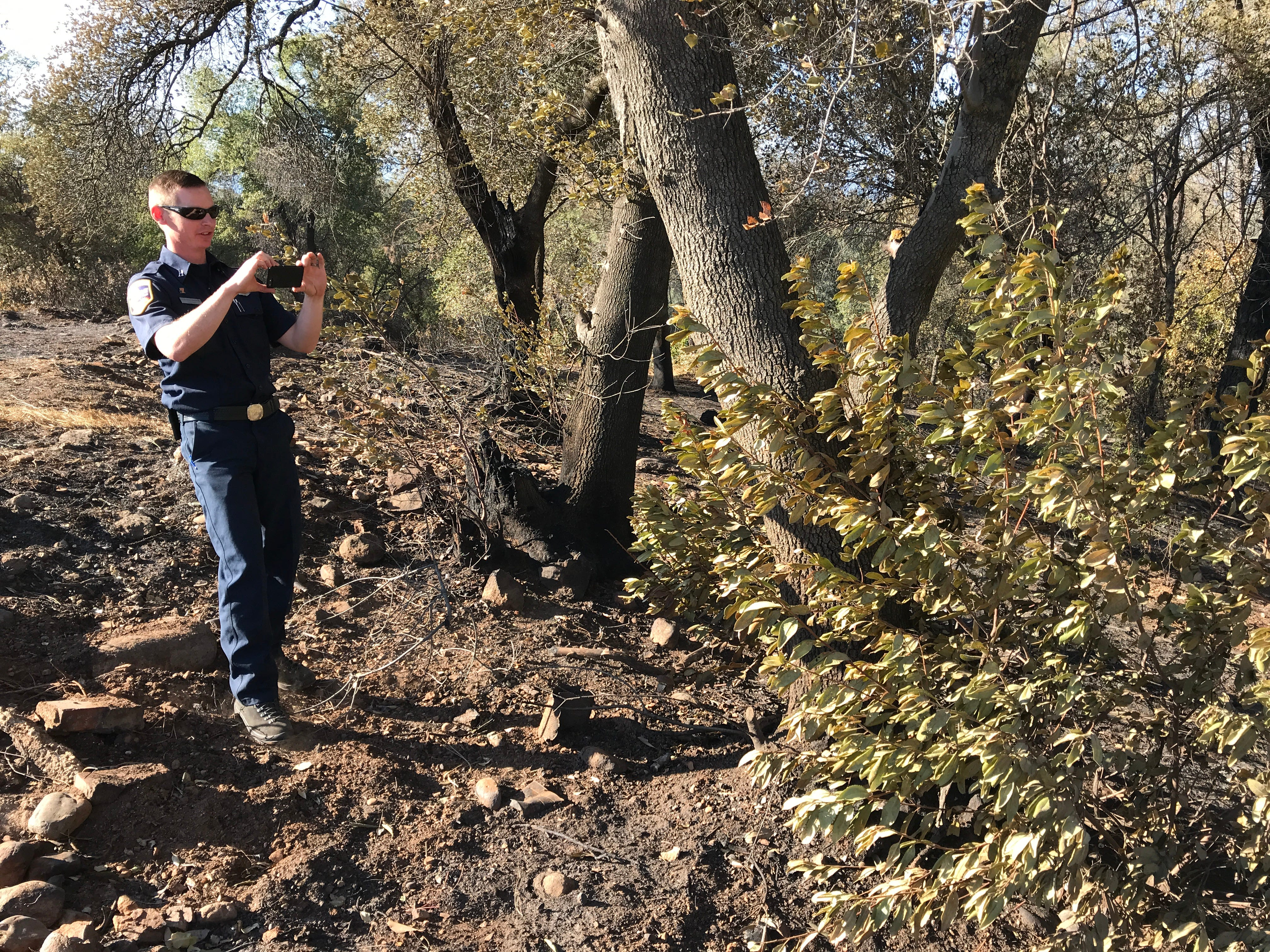 """Nick Wallingford of the California Department of Forestry and Fire Protection takes a photo at the end of Nancy Court of a bush with foliage freeze from the Oct. 14 Masonic Fire. The wind-driven fire gave the green vegetation a windswept appearance by """"freezing"""" the leaves in one direction. A defensible-space project that was done in the area is credited with preventing a widespread loss of homes."""