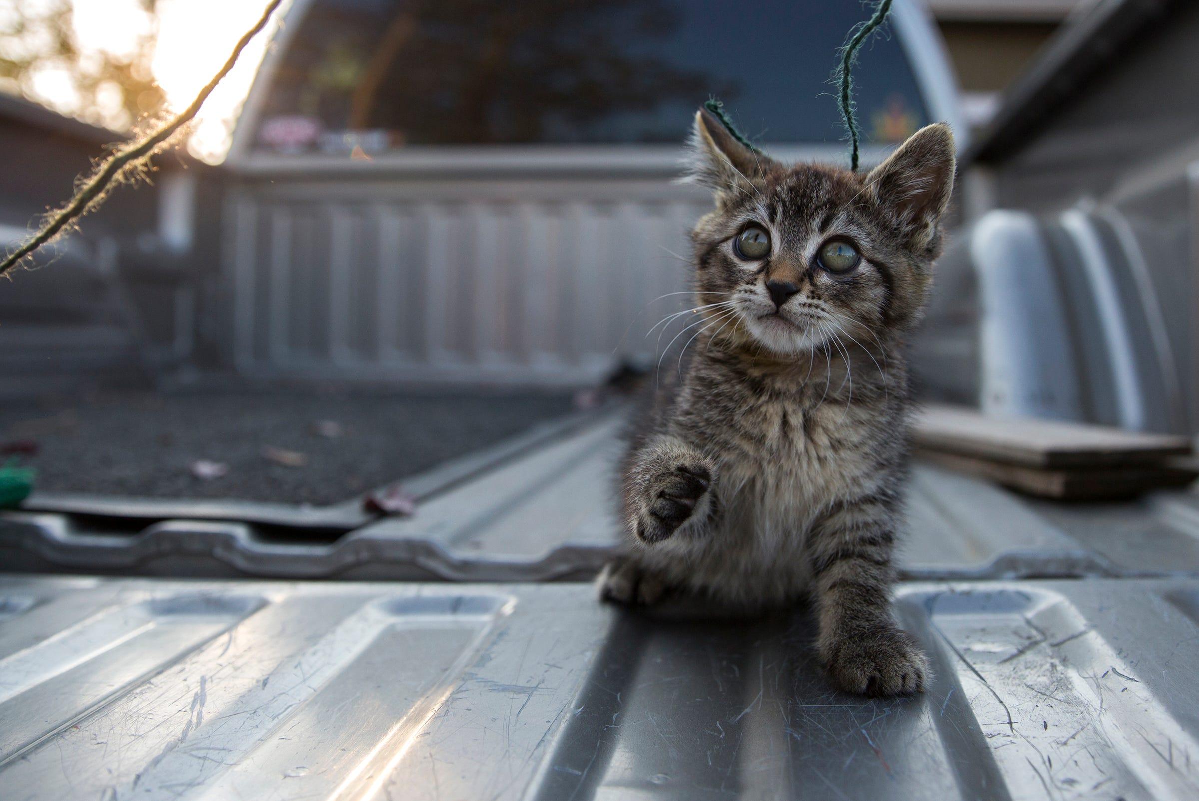 That Sticky Cat