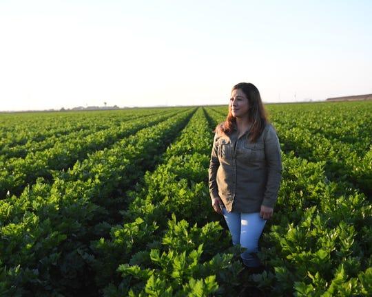 María Ramírez trabaja seis días por semana en los campos, principalmente recogiendo coliflor. Aquí se encuentra en un campo de apio justamente a las afueras de Salinas.
