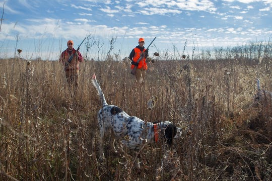 A pair of quail hunters with their dog on point, a sight hunters might see more of this year.