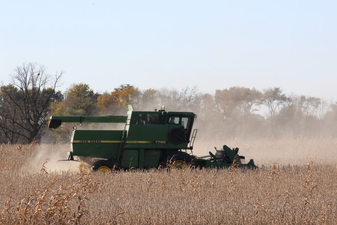 Dust fills the air as this combine harvests a field of dry soybeans in Dodge County.